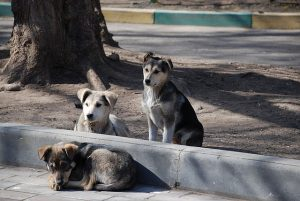 640px-Stray_dogs-pups